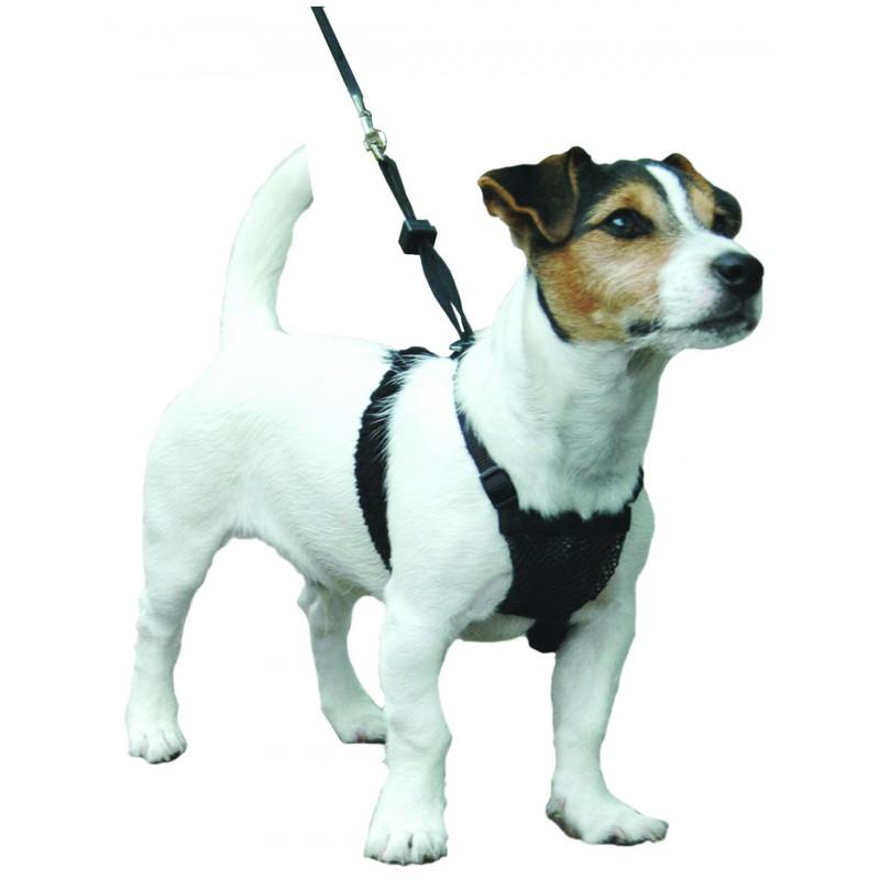 Harnais Sporn™ - Education & Dressage pour chien - Lupi