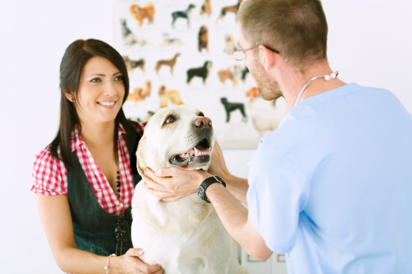 Conseil veterinaire