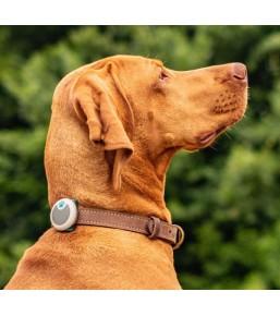 Animo - Tracker d'activité pour chien