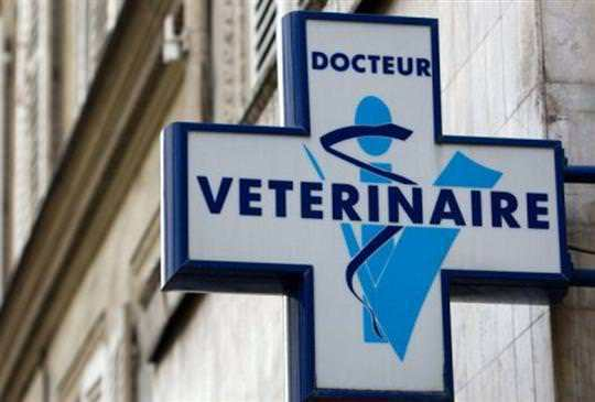 Croix veterinaire direct-vet.be